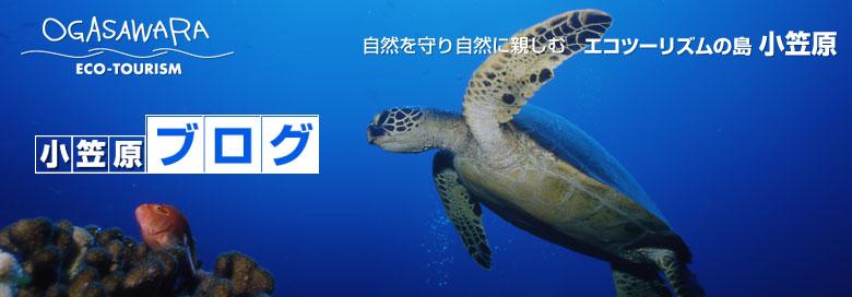 小笠原ブログ | 自然を守り自然に親しむ エコツーリズムの島